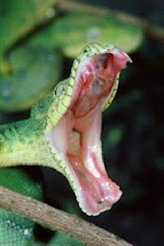 蛇 APP截图