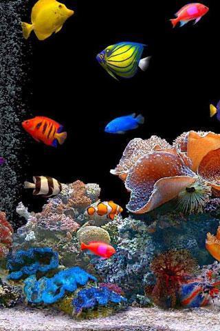 魚游泳 APP截图