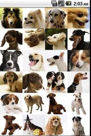 世界名犬大全 APP截图