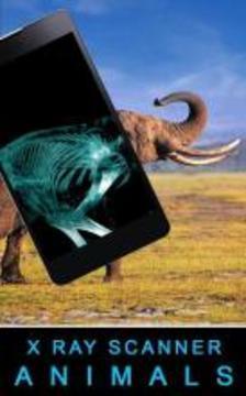 Xray Animals Prank APP截图